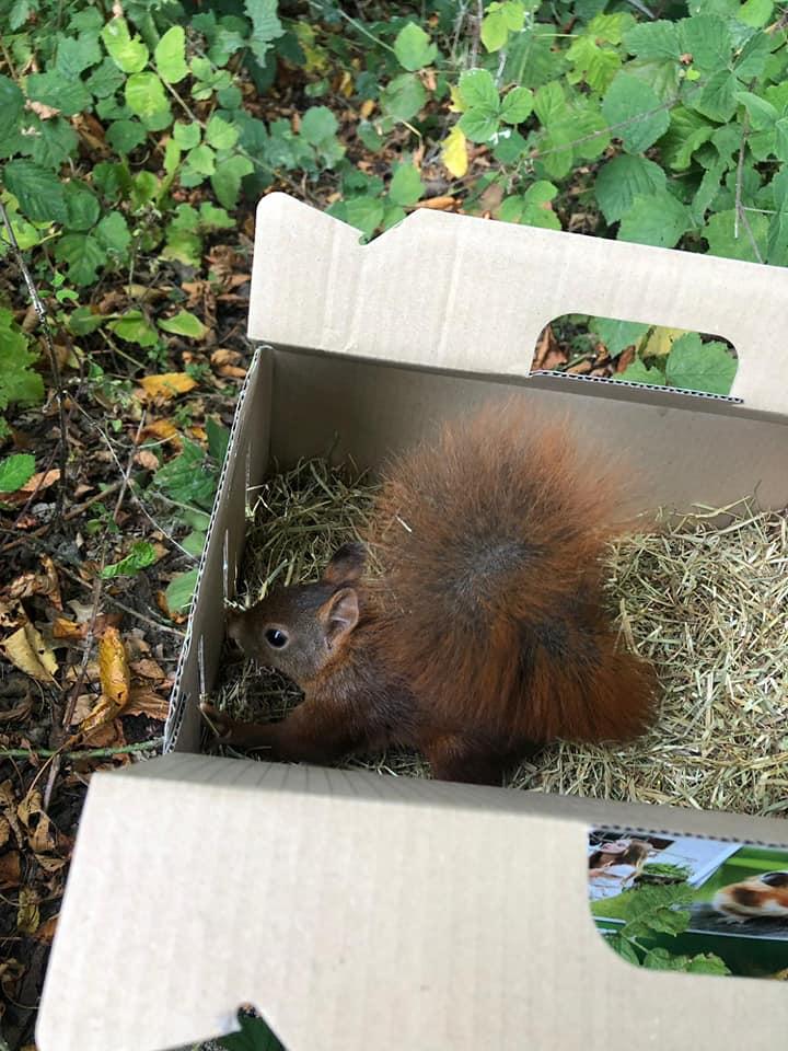 Eichhörnchen zurück in seiner Heimat