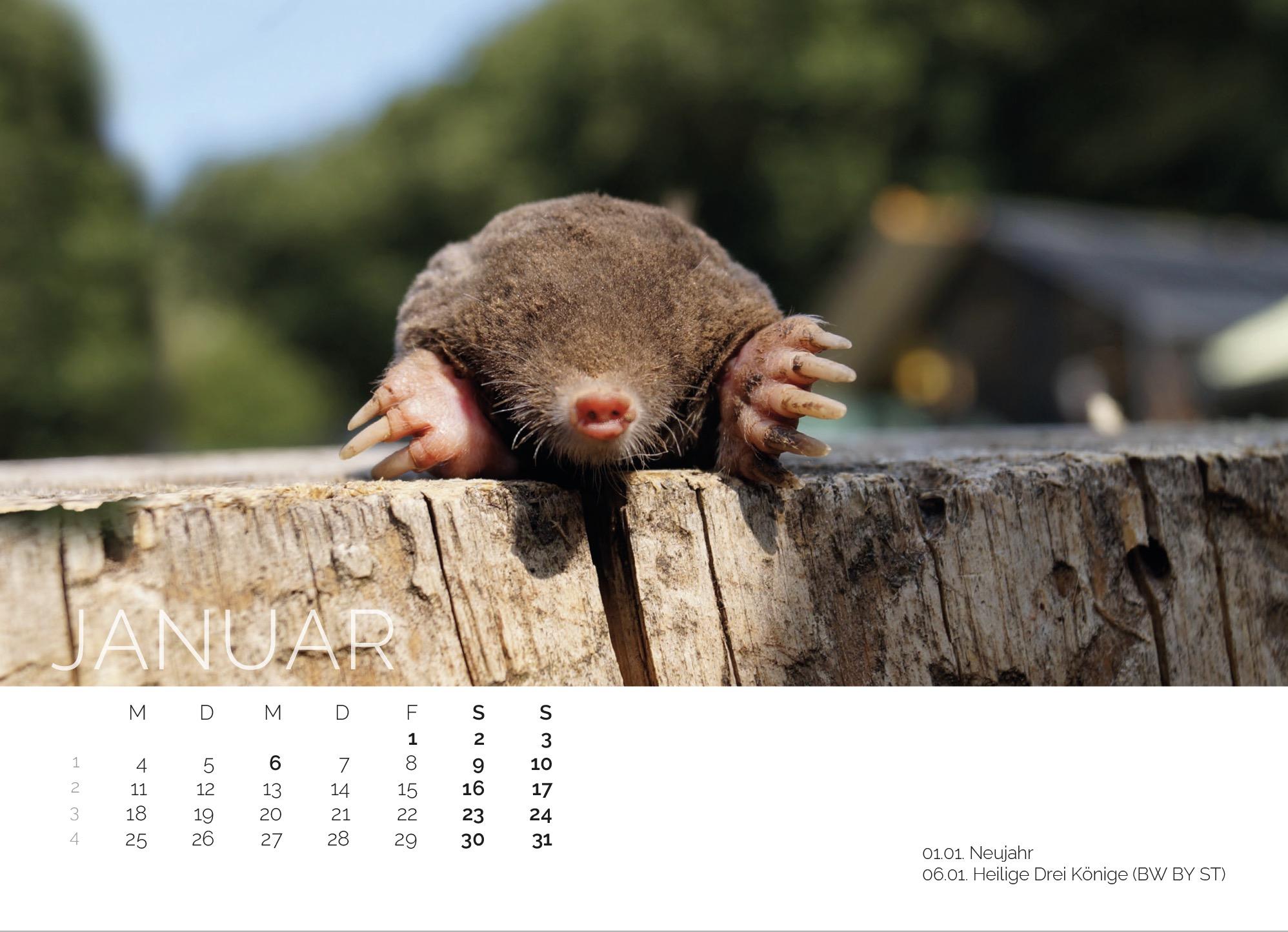 Maulwurf Kalender 2021