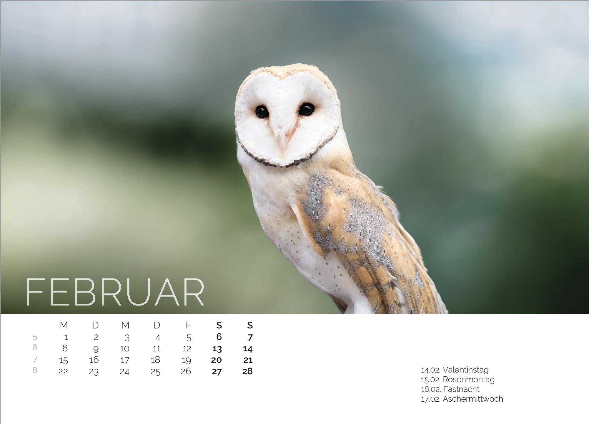 Schleiereule Kalender 2021